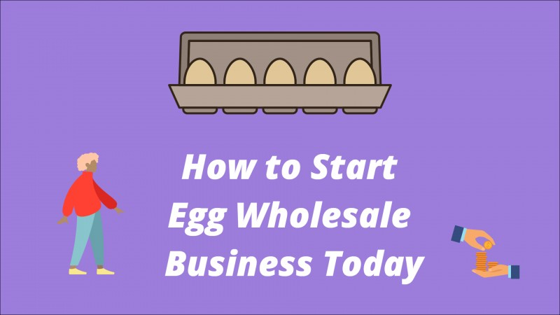 Egg Wholesale Business - Everybody Need to Start Working From Today